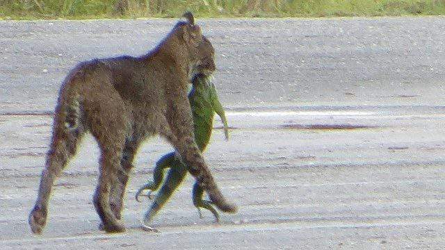 Photo: Loxahatchee Delicacy courtesy of Vincent Sinagria