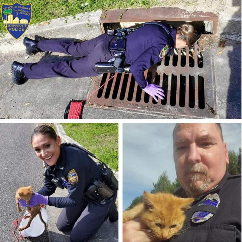 JSO Officer in Zone 6 rescue kitten.
