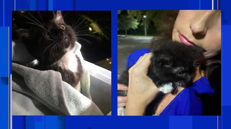 News4Jax crew rescues kitten from debris after Elsa tears through Jacksonville