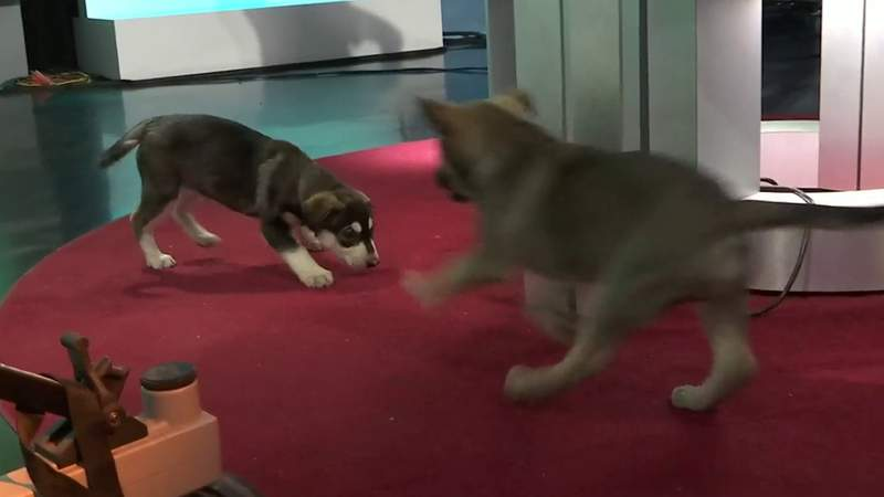 Puppies from the Nassau Humane Society take over the studio   River City Live