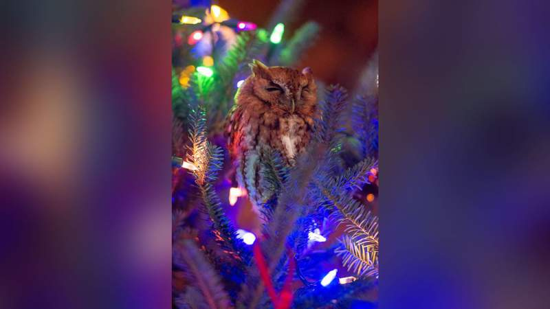 """""""She comes very dramatically into the dining room and goes, 'Mama, that ornament scared me,'"""" Newman told CNN. """"Then she bursts into tears."""""""