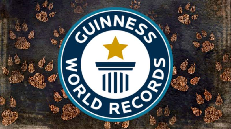 Guinness World Records dog background