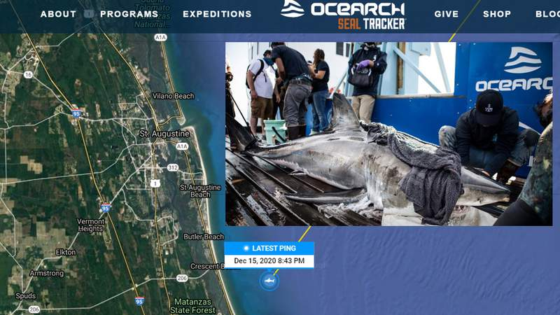 Andromache - Photo by OCEARCH