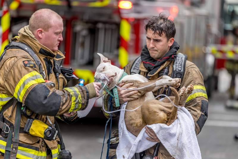 Jacksonville firefighters rescued this dog from a building fire Wednesday.