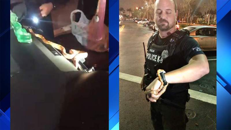 Pembroke Pines police officer Patrick Pagliai helped a woman who found an unwanted snake inside her car. (WPLG)