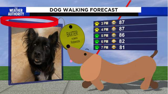 How To Get Your Dog Featured On The Dog Walk Forecast