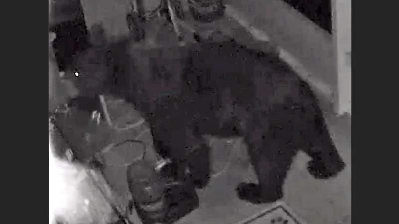 Bear spotted in residential neighborhood