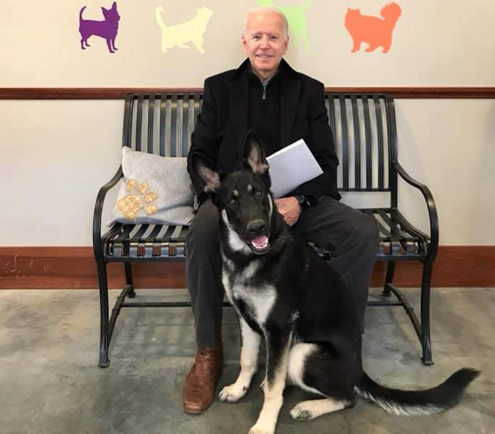 Major' deal: Biden's German shepherd to become 1st rescue dog to live in White House