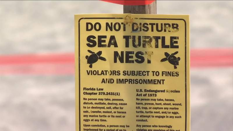 Sea Turtle Nesting Season Underway