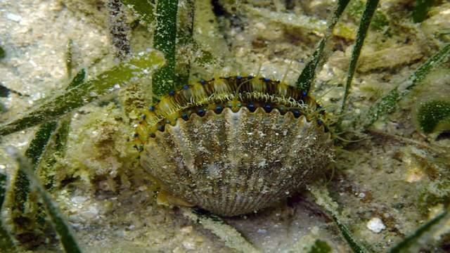 Photo courtesy of Florida Fish and Wildlife