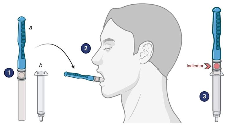 """The CLIP-CAM technology for the Luminostics-UF team involves the collection of saliva by a collection pad on a """"lollipop"""" stick that is set below and to the side of the tongue for 3-5 minutes until the indicator spot changes color, indicating the pad is full of saliva."""