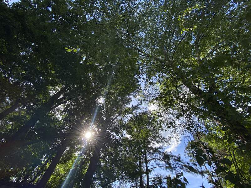 In this May 29, 2020, photo, sun shines through trees in the suburban Atlanta backyard of Associated Press journalist Alex Sanz. He went camping there and realized the adult, pandemic version of a childhood dream, even if nothing about it was how he imagined it. (AP Photo/Alex Sanz)
