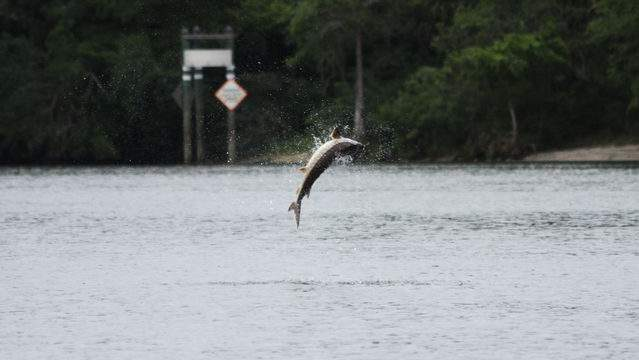 Photo via Florida Fish and Wildlife Conservation Commission