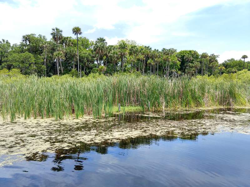Funds to protect wetlands like the Guana River are included in this the state budget signed by Gov. DeSantis.