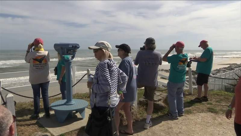 200 volunteers help spot right whales along the First Coast