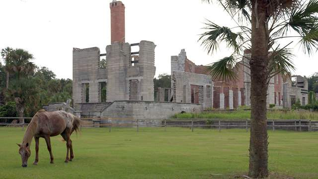 A wild horse grazes next to the ruins of the Dungeness mansion in the south end of Cumberland Island, Georgia National Seashore.