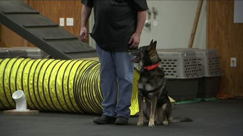 Sen. Scott calls for study on use of canines to screen airport travelers for COVID-19