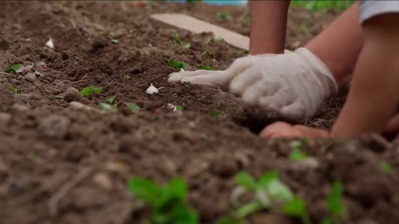 Gardening advice for spring