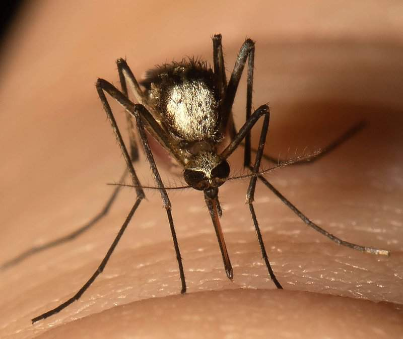 A new invasive mosquito that spreads yellow fever has landed in South Florida and could spread northward across the state.