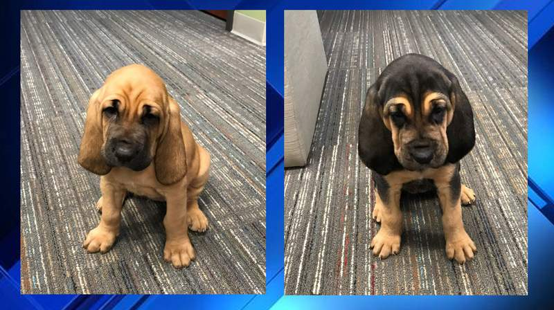The Nassau County Sheriff's Office has two new K-9's and is asking for the community's help naming its four-legged team members.
