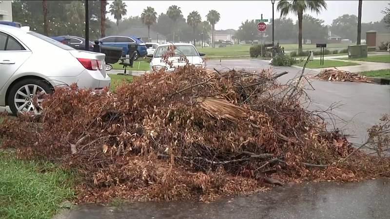 Yard waste (Photo: News4Jax)