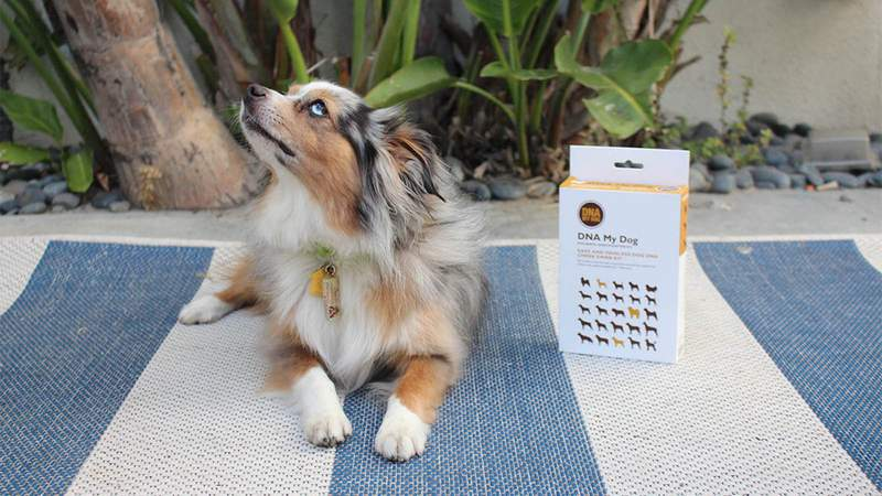 Ever wonder what your dog's breed? DNA My Dog Breed Identification Test finally helps you know.