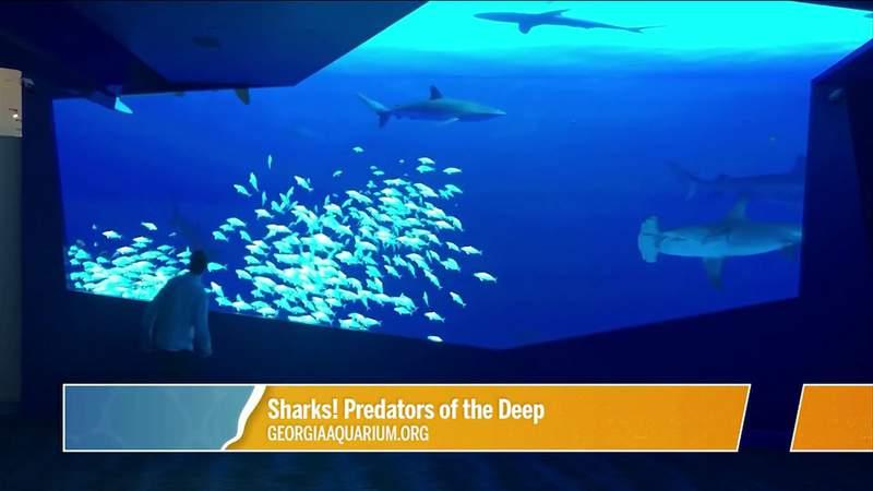 Sharks! Predators of the Deep | River City Live