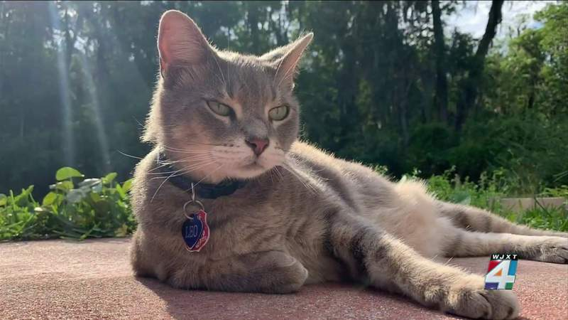 After family cat found dead, Jacksonville homeowners say 2 dogs are responsible