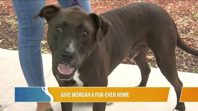 Give Morgan A Fur-ever Home..PLUS Pasta4Paws   River City Live