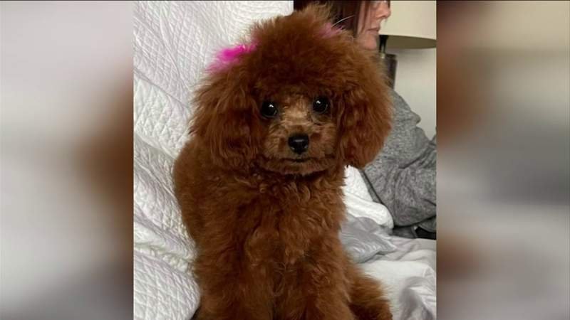 Stolen puppy recovered