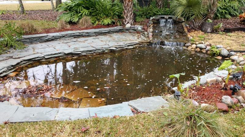 What used to be a magnet for mosquitoes in my back yard is now an actual pond.