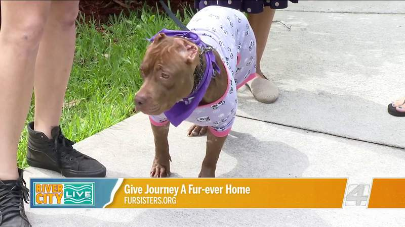 Give Journey a Fur-Ever Home with Fur sisters | River City Live
