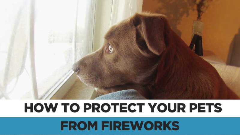 ACS offers tips to keep pets safe from fireworks, New Year's Eve celebrations across SA