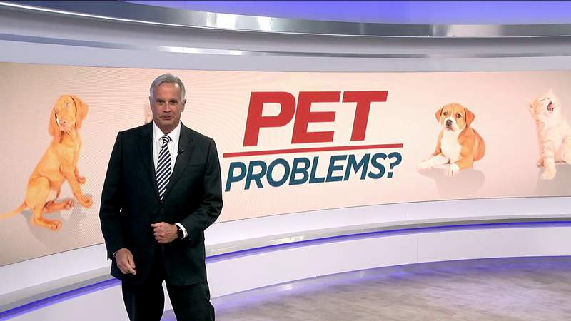 Pet Problems? Fighting the Fat