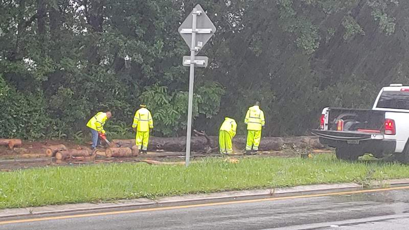 The Jacksonville Fire and Rescue Department said a tree fell and hit two cars on Roosevelt Boulevard on Wednesday.