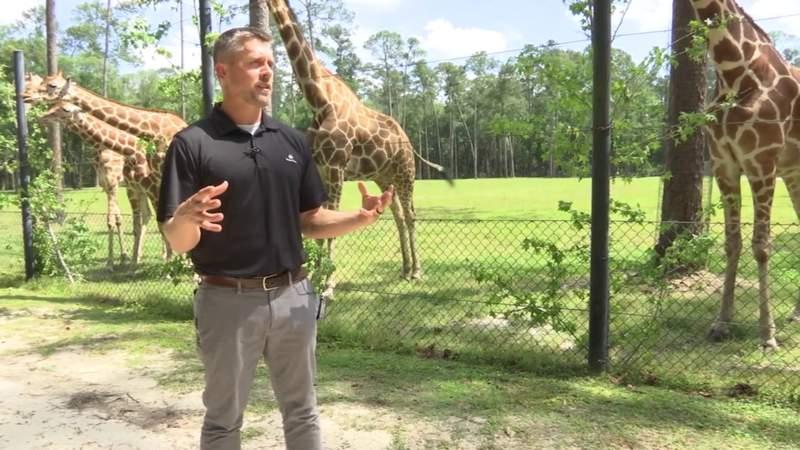Animal Conservation at White Oak   River City Live