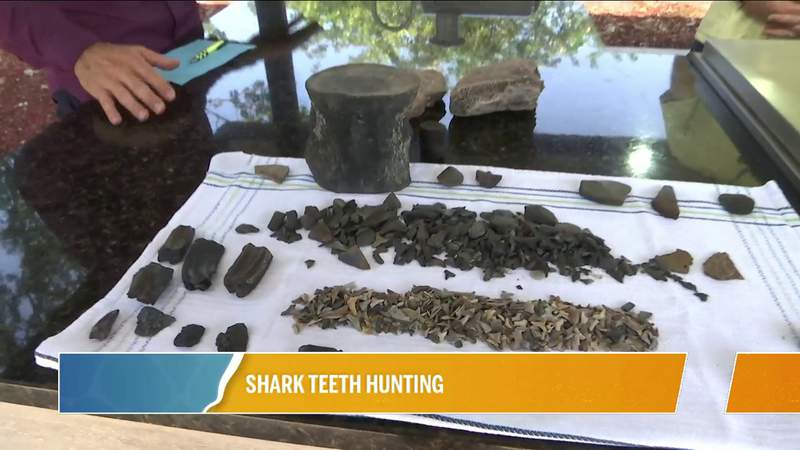 Shark Teeth Hunting with The Digger Dude | River City Live