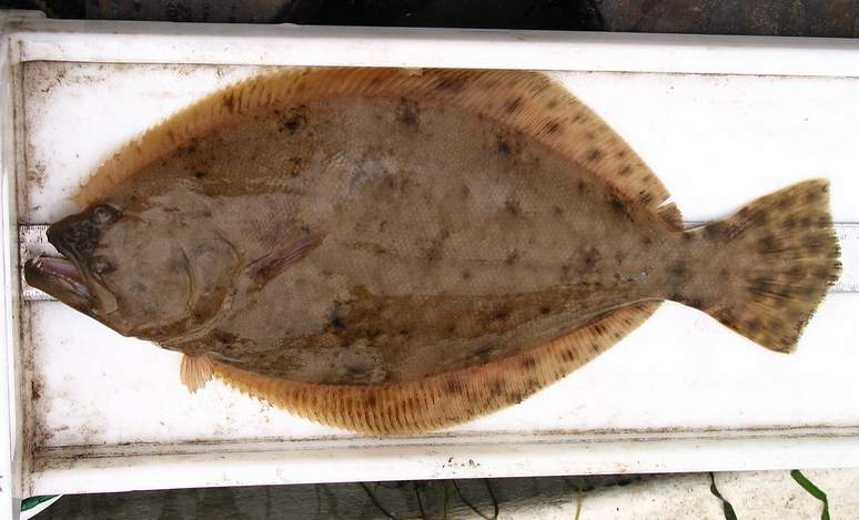 Flounder fishing regulations are changing