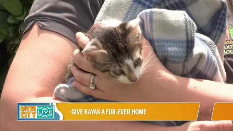 Give Kayak A Fur-ever Home at Jacksonville Humane   River City Live