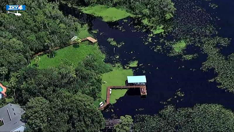 Aerials of what appears to be a large bloom of blue-green algae Monday in Julington Creek.