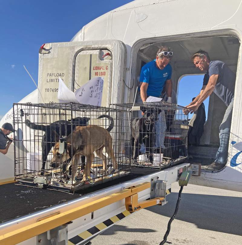 16 rescue dogs arrive at the Nassau County Humane Society from Puerto Rico