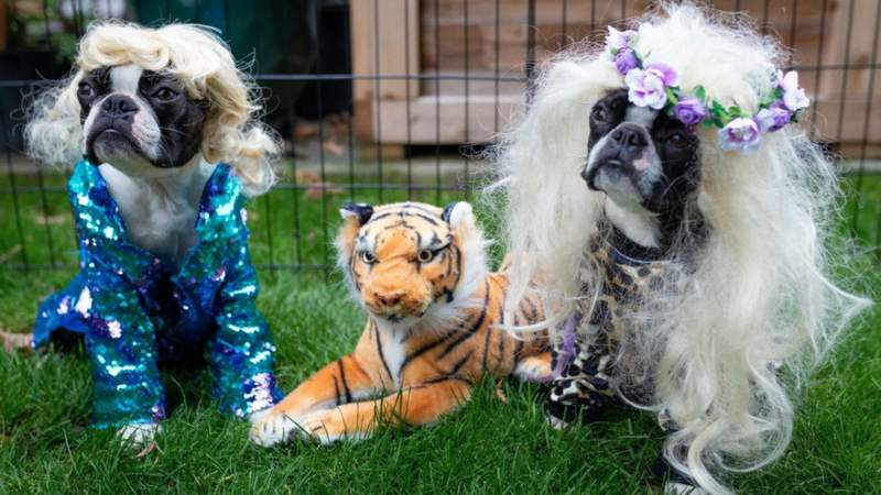 Dogs dressed as characters from Tiger King. Contributed photo