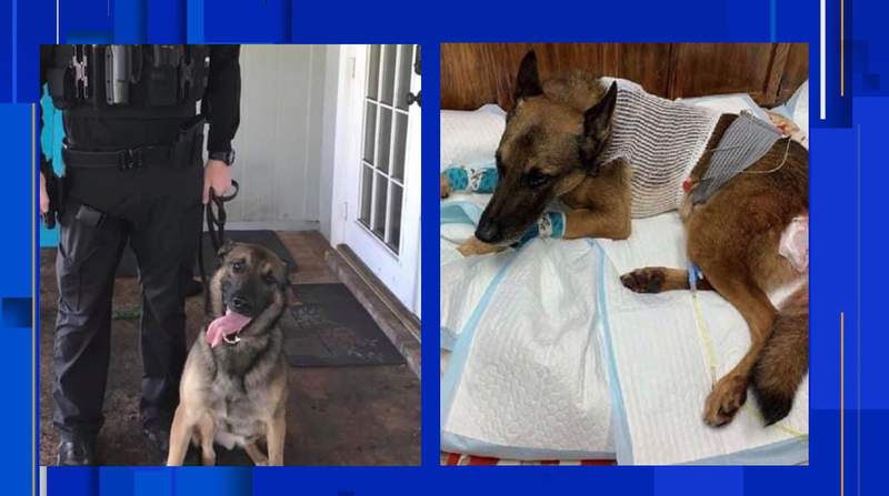 McDowell also shot a JSO K9 with a rifle during the manhunt. The K9 is expected to be OK. Investigators found the rifle near where the K9 was shot. (Photos: FOP5-30)