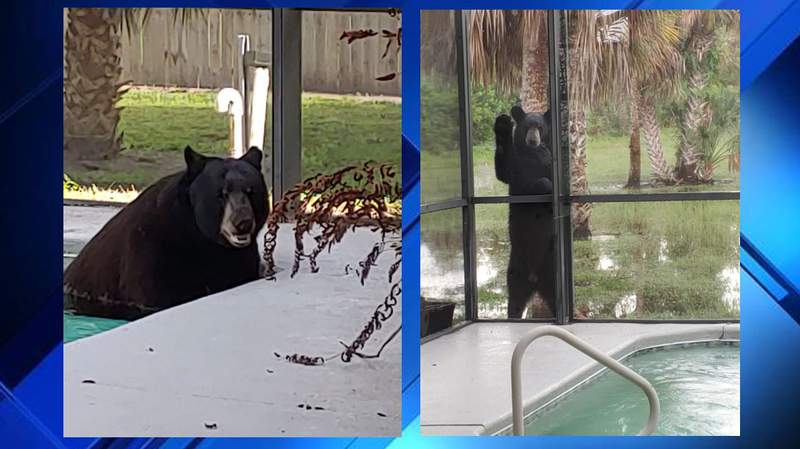 Karen Bockraths says the bear broke into her pool and took a dip!