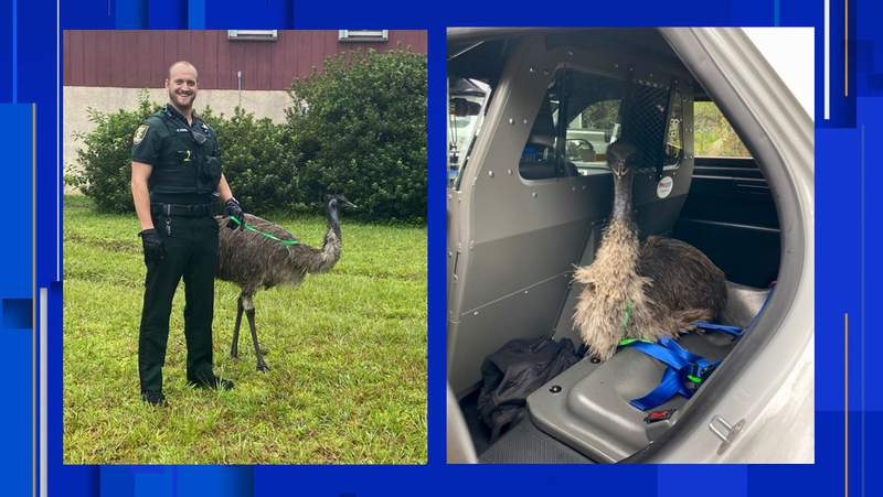 The St. Johns County Sheriff's Office responded to an interesting call over the weekend.