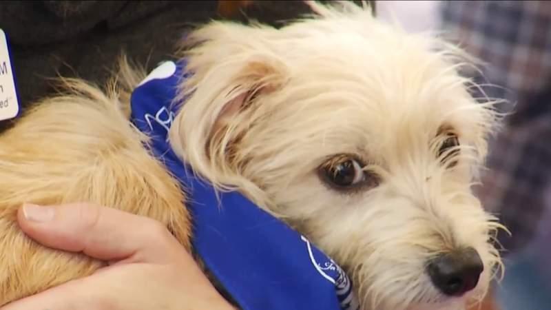 First Team Subaru helps promote local pet adoption