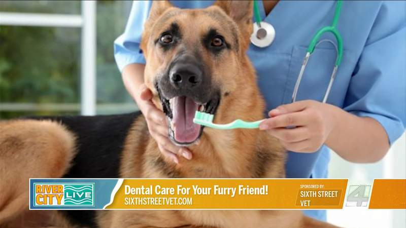 Dental Care For Your Furry Friend! with Sixth Street Vet | River City Live