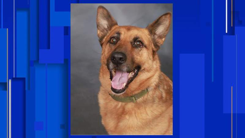 Newly retired K9 Diesel, recently diagnosed with cancer, passed away.