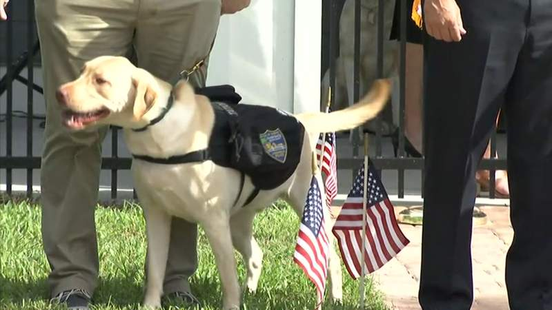 Buster was adopted by the Jacksonville Sheriff's Office through the K9s for Warriors Station Dog program.