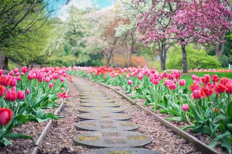 A beautiful shot of the springtime